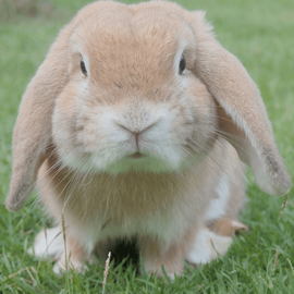 When searching for cruelty free and vegan cosmetics, watch out for fake cruelty free bunny logos. There are only 3 bunny logos you can really trust. This post tells you what they are and how to recognise them.